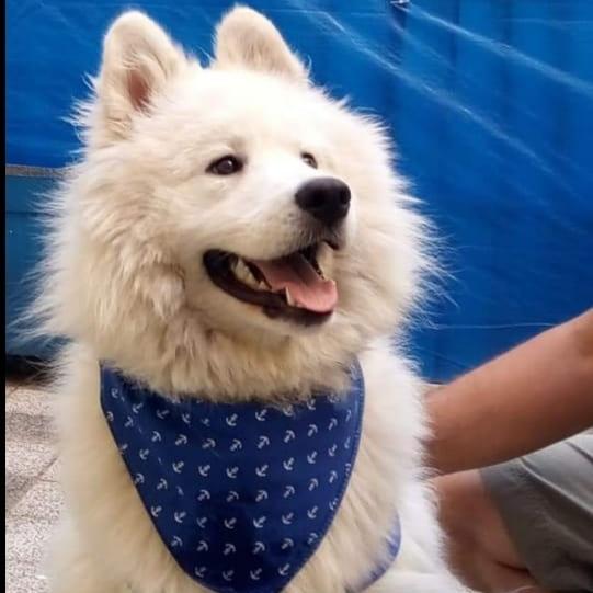 oscar profile picture