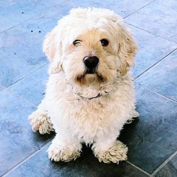 gogo Profile Picture