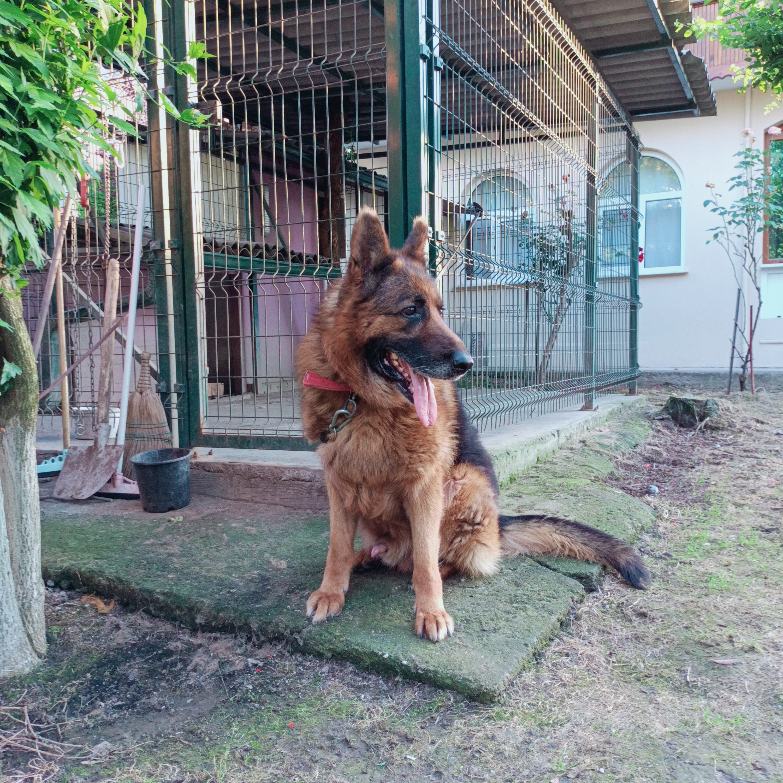 sibo Profile Picture