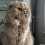 emre tuncer Profile Picture