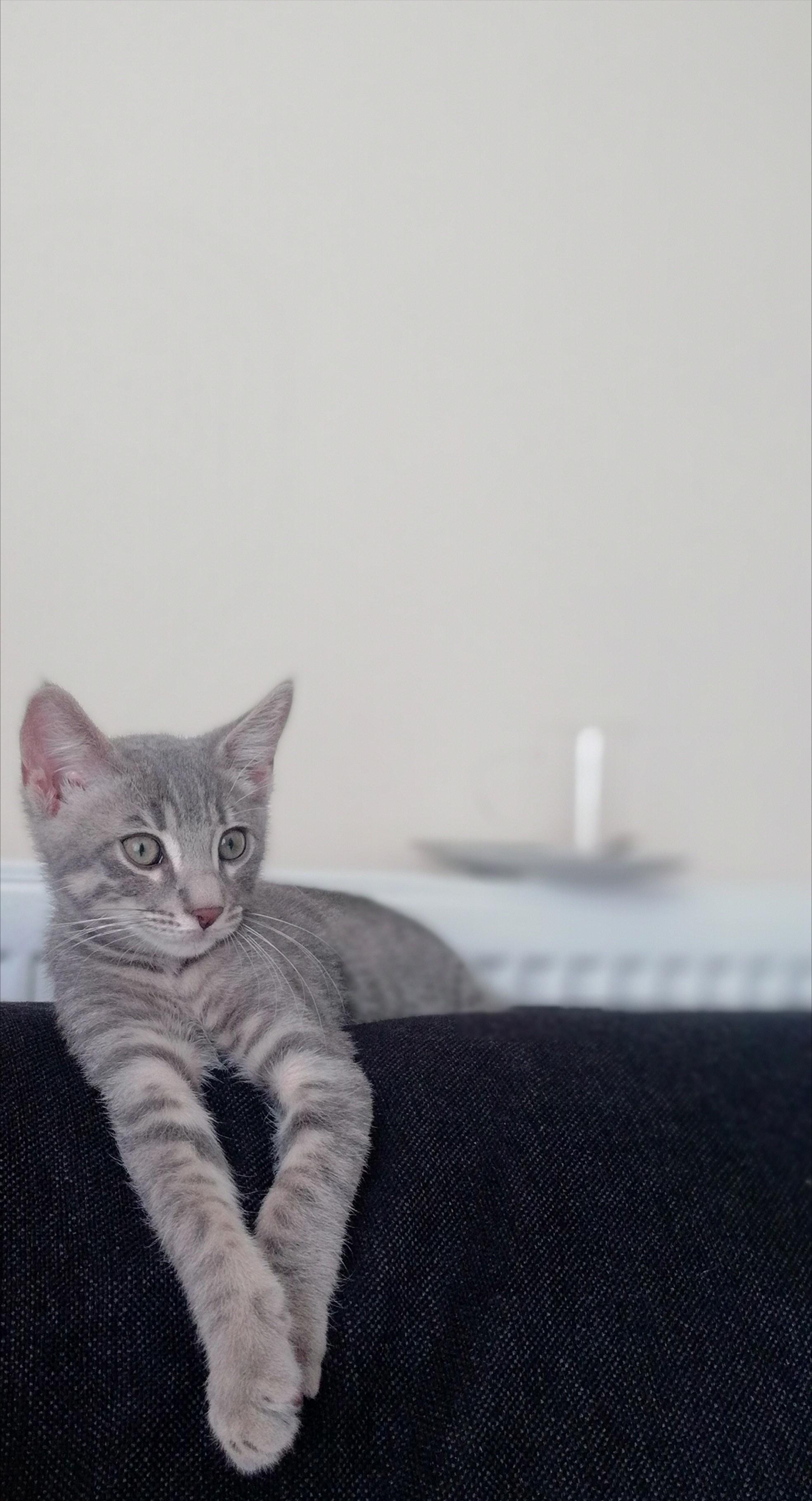 cakil Profile Picture