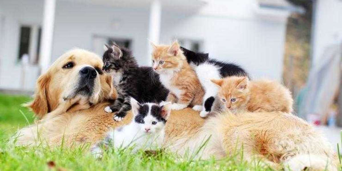 Evcil Hayvan Sigortası Ne İşe Yarar?