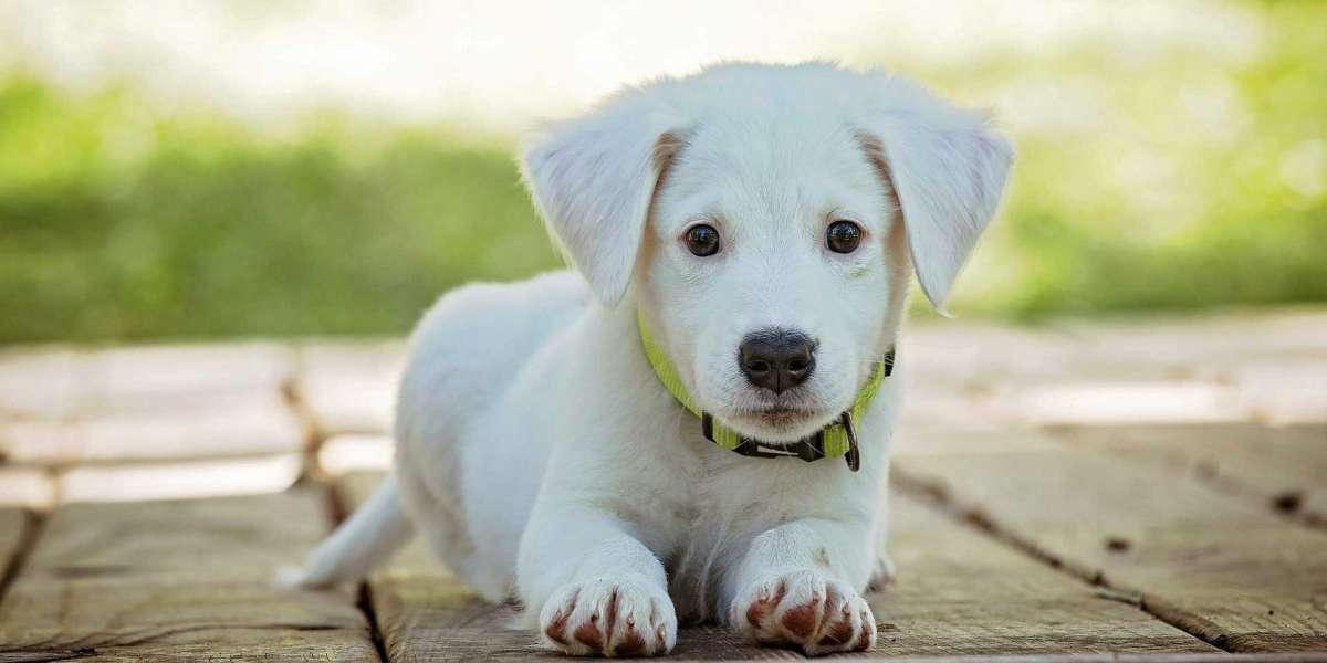 Evcil Köpek Cinsleri
