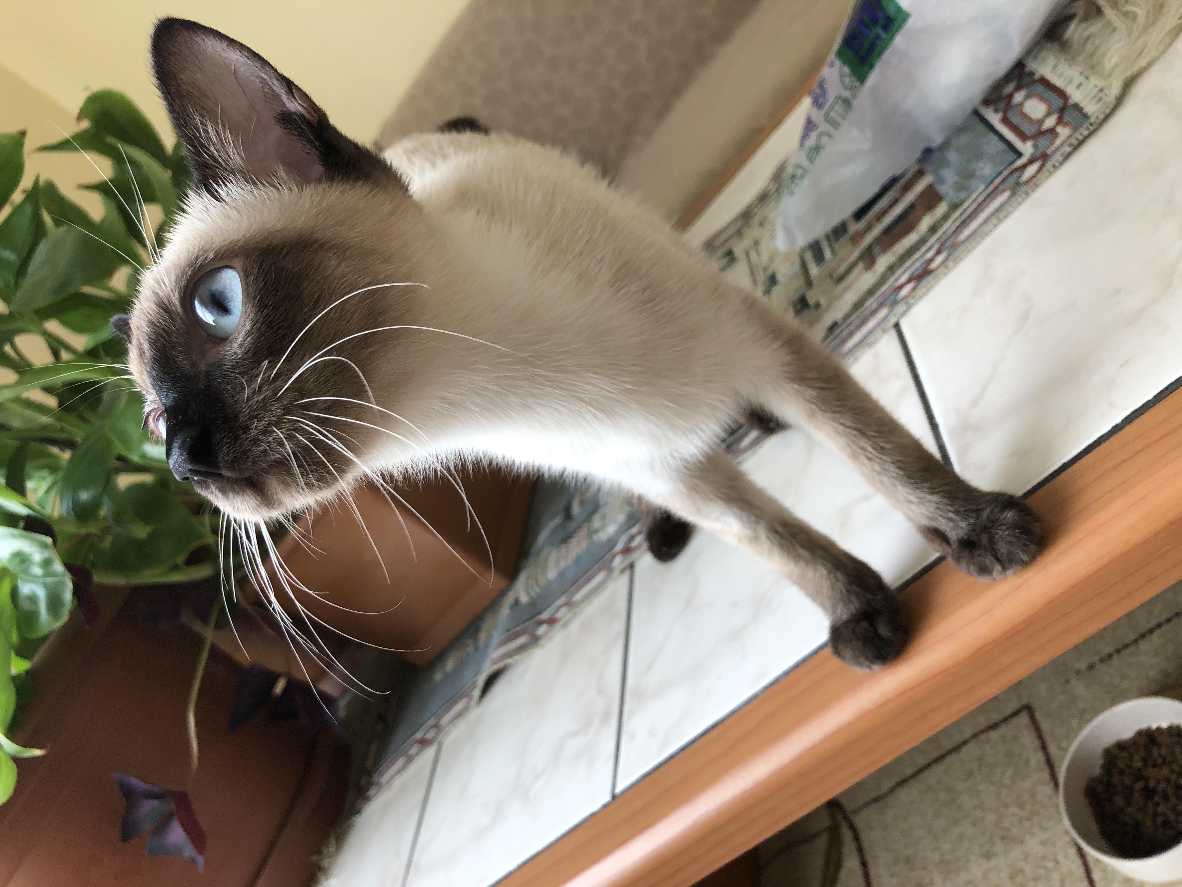 karamel Profile Picture