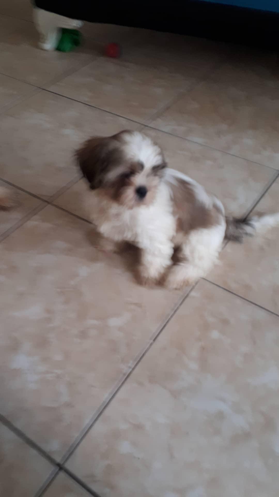 zuzu Profile Picture
