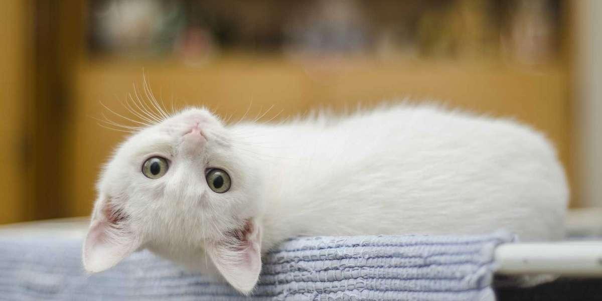 Kedi Kısırlaştırma Ücreti