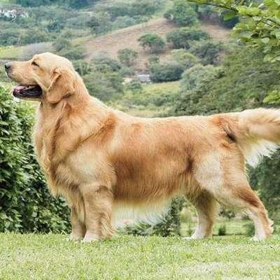 Zeki Köpek Irkları