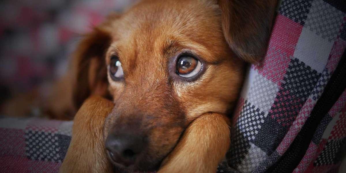 Psikoloji Neden Hayvan Davranışlarını İnceler?