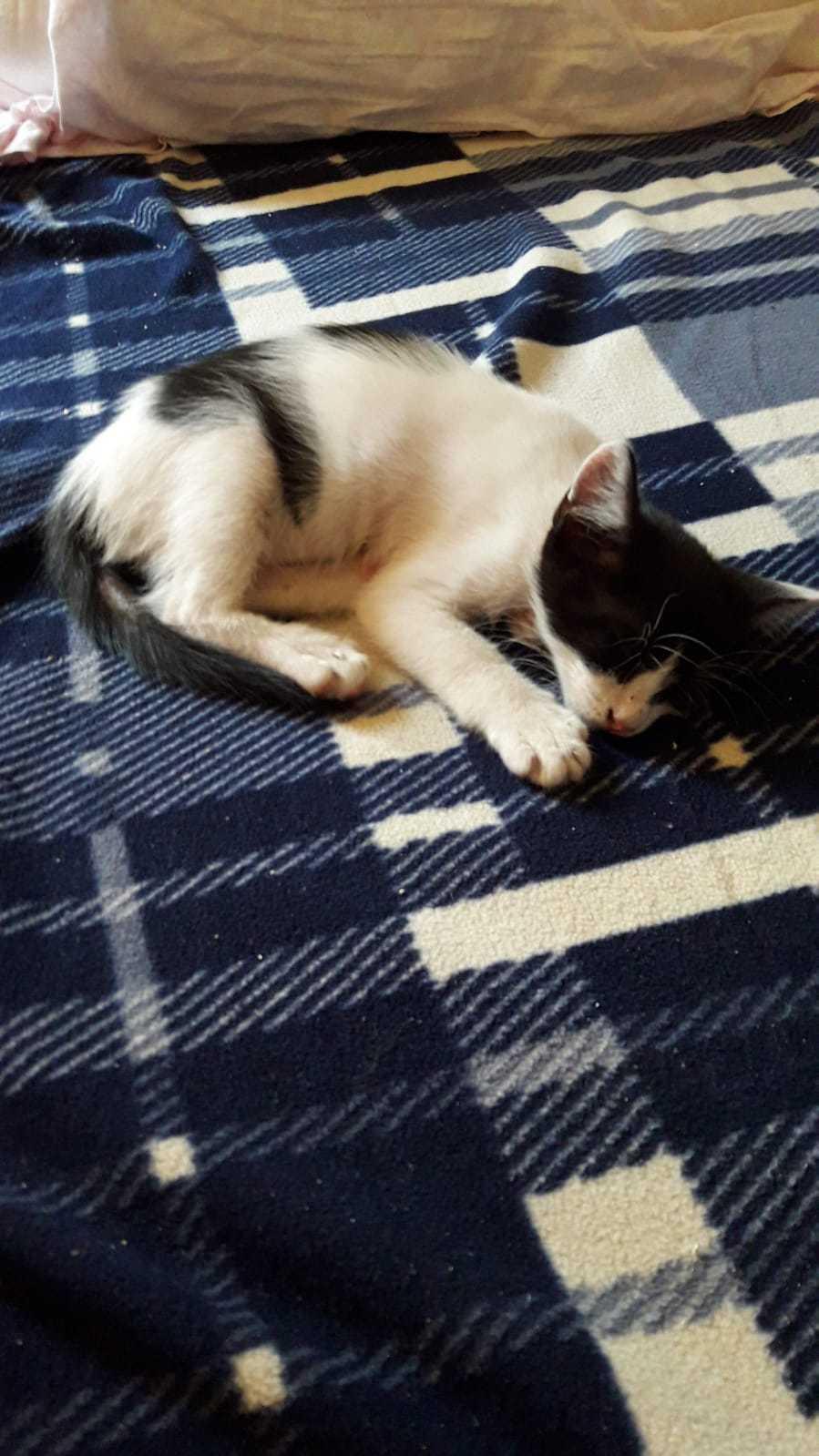 Yeni Sıcak Yuvasını Arayan Yavru Ked