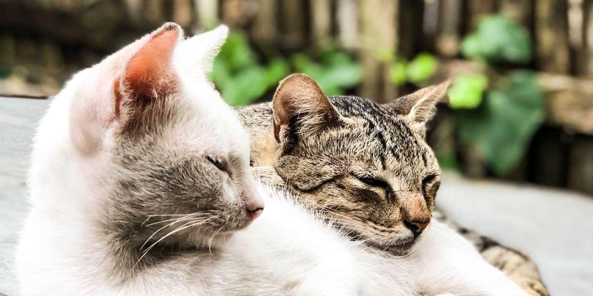 Türkiye'deki Kedi Irkları