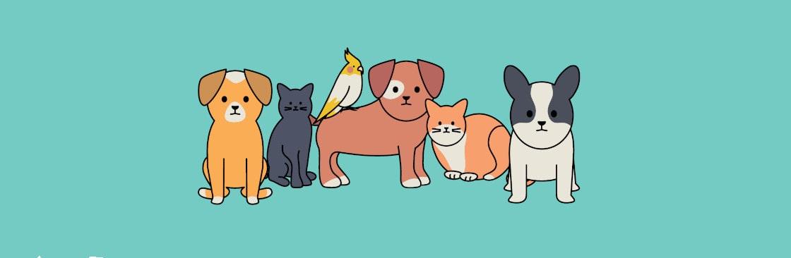 Kedi Bakışı Cover Image